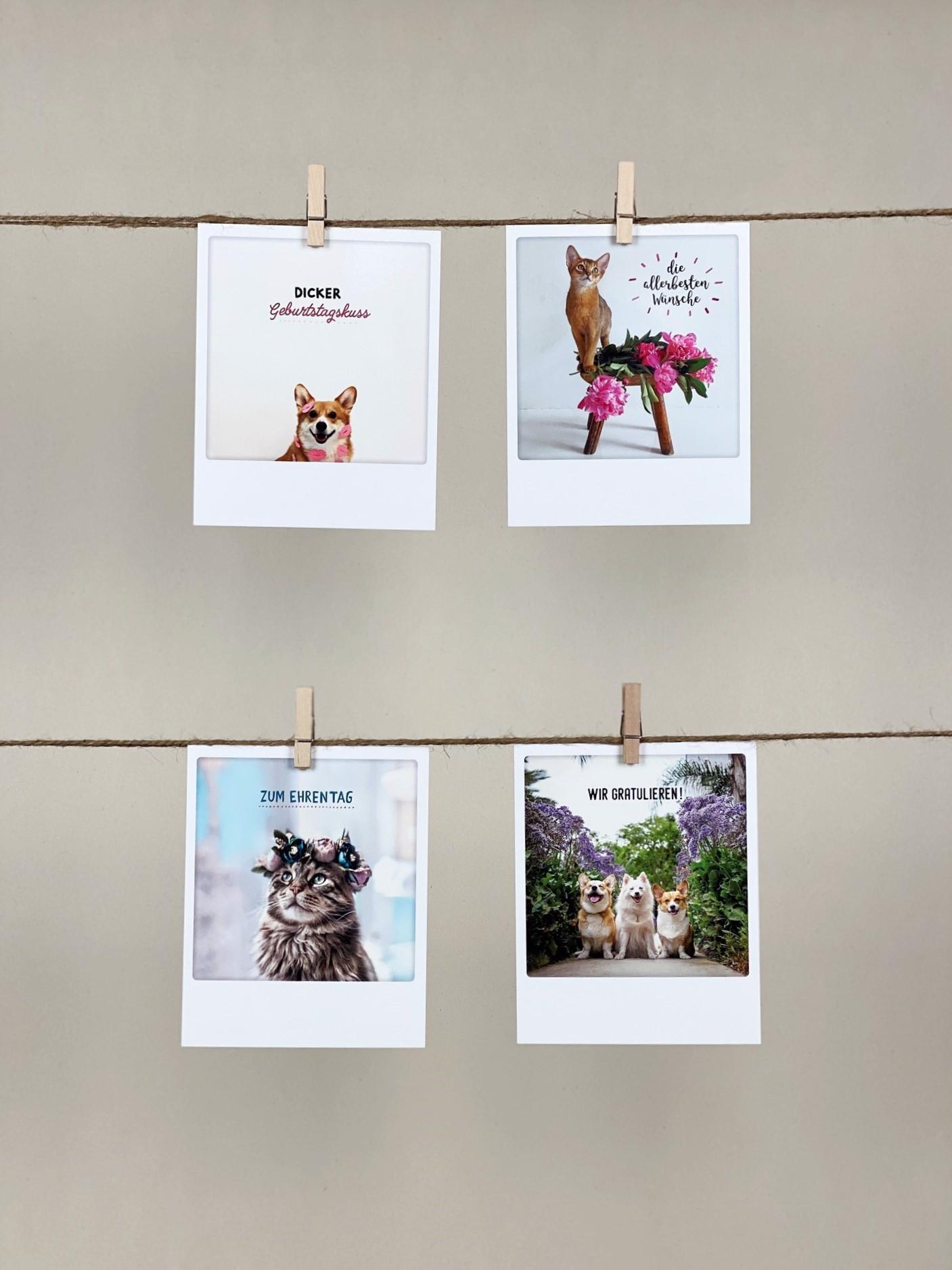 Polaroid-Karten-Set Geburtstag Tiere